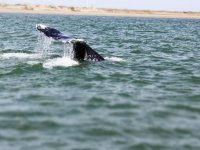 Whales in Baja