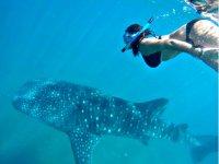 Snorkel tiburon