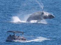 Whales in La Paz