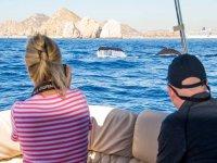 Temporada de ballenas