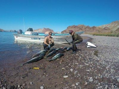 Ricardo's Diving Tours Pesca