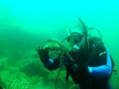 Ricardo's Diving Tours Buceo