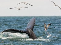tours de whale watching