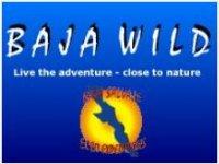 Baja Wild