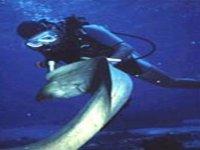 An adventure under the sea