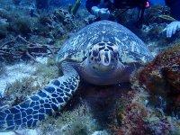 Descubre la fauna marina