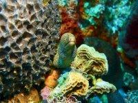 Contempla morenas pintas bajo el agua