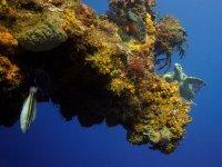 Tortuga cerca de arrecife