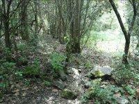 Caminos cubiertos de hojas