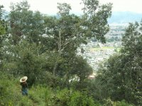 Vistas del pueblo entre los arboles