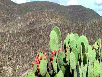El Planeta México
