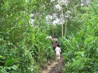 hiking in the jungle