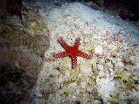 Estrellas de mar en el buceo