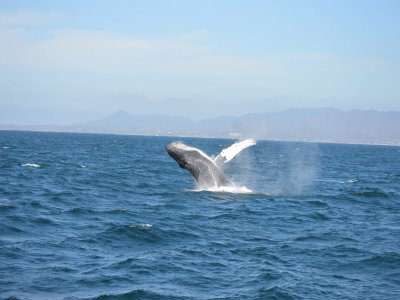 Vallarta By Boat Tours Whale Watching