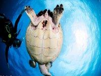 Toca a la tortuga