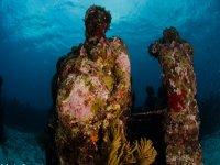 Los arrecifes que se hacen