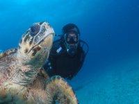 bucear con tortugas