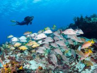caves Dive Dive Dive looking fish