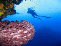 Reefs in Cozumel