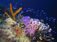 Sponges and corals in Cozumel