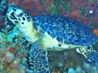 Blue Magic Scuba Snorkel