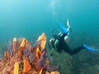 Buceo y vegetacion marina