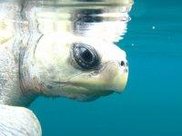 Snorkel junto a tortugas marinas