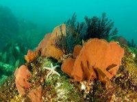 Vegetacion marina