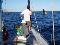 Fotografiando la ballena desde el barco