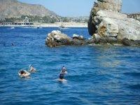 Haciendo snorkel en la roca del pelicano