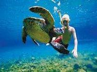 Snorkel with turtles