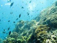 snorkel in reef