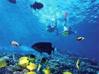 snorkel in reef tulum