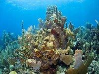 Snorkel en arrecife