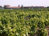 Vineyard Finca