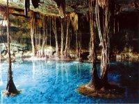 Cenotes. Muchas raíces de árboles llegan directamente al agua