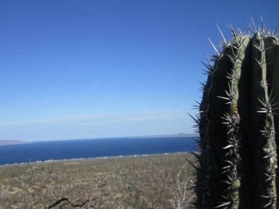 Quercus Baja Caminata