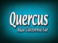 Quercus Baja