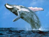 ballenas en mexico