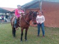 Enjoy the horse