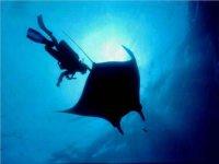 Descubre la vida marina del Océano Pacífico