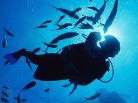 Bucea acompañado de la vida marina de Puerto Vallarta