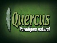 Quercus Canopy