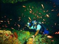 Discover the marine life of Puerto Vallarta