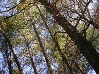 Durango Woods