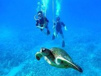 Snuba with turtles