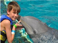 Kiss of a dolphin
