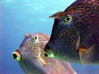 Beautiful species of fish