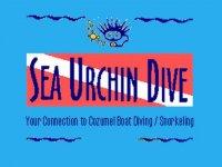 Sea Urchin Dive