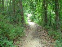Caminar por el sendero